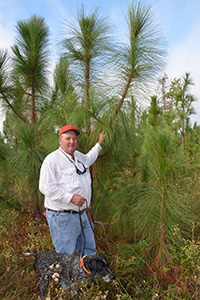 Simon Winston is standing by an estimated 8-year-old longleaf pine.