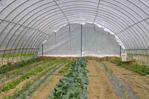 The benefits of high tunnels can include extended growing seasons for fruits and vegetables, improved air and soil quality, along with reduced nutrient and pesticide transport. The national initiative is administered through NRCS' Environmental Quality Incentives Program (EQIP).