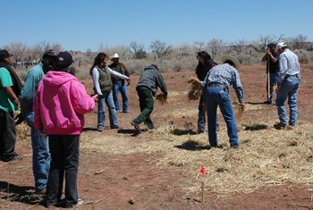 Applying native grass hay mulch at a seeding workshop in Ganado, Arizona on the Navajo Nation.