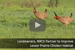 Landowners, NRCS Partner to Improve  Lesser Prairie Chicken Habitat