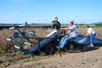 PMC employees harvest edible thistle using custom built equipment. Edible thistle is an important nectar resource for the Federally Threatened Oregon Silver-spot butterfly