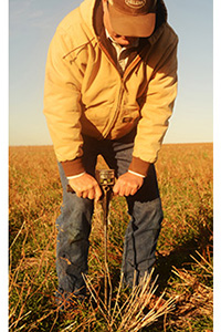 Byers, Texas farmer, Tommy Henderson, inserts a soil pressure probe in his no-till dryland wheat field to test how loose his soils are and for soil moisture. The full length of this two foot probe easily goes into the soil.