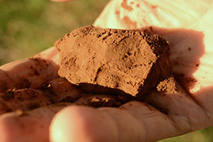 Despite receiving only 50 percent of his average annual rainfall, Henderson's soil still has enough moisture to hold together in his hand.