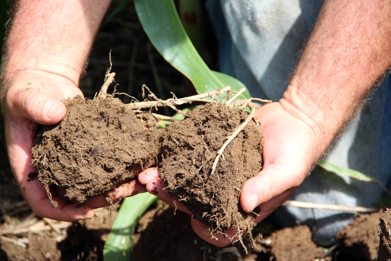 Ward/Soil Health - hands holding healthy soil 1296px