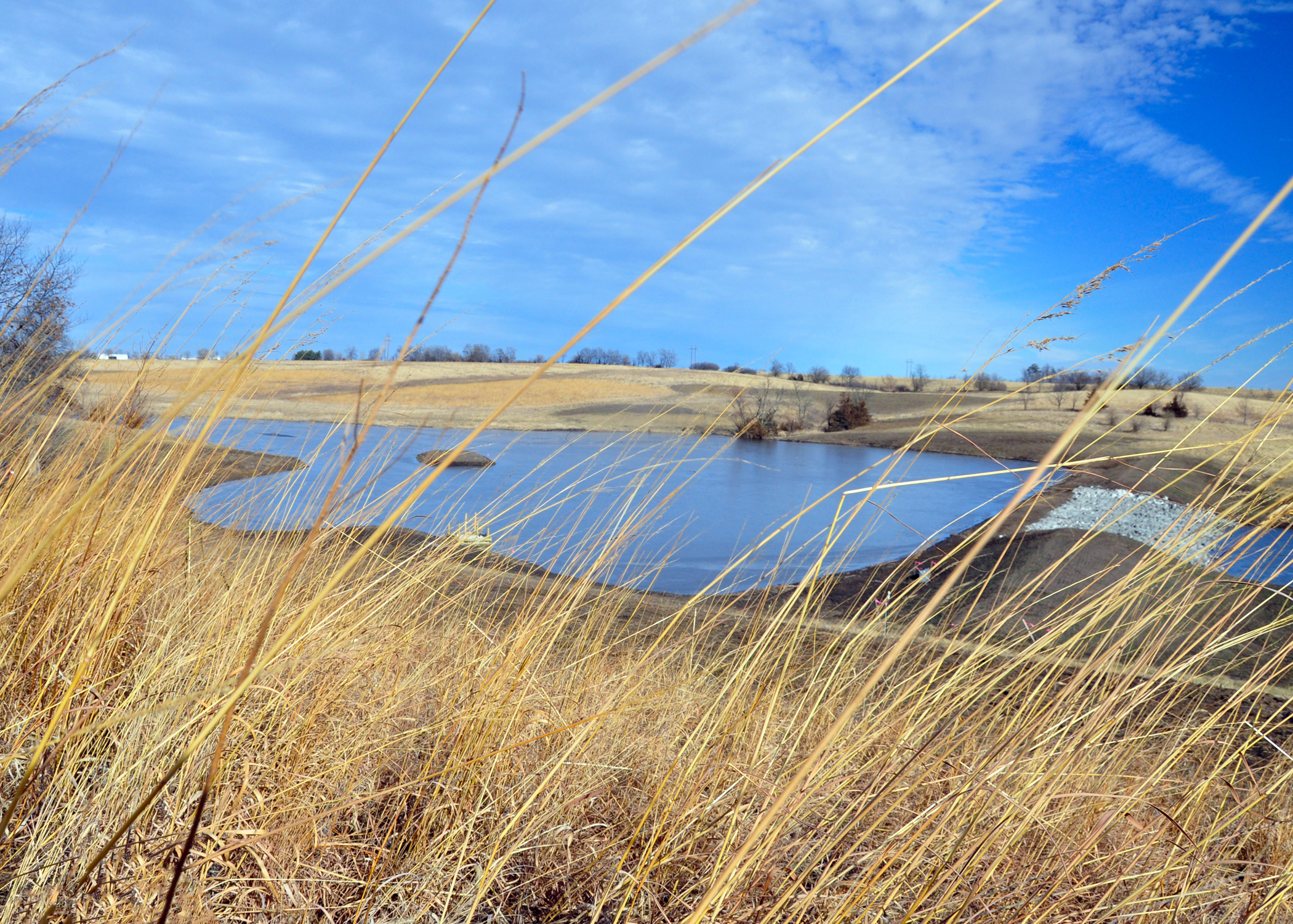 A newly created wetland can be seen through CRP ground in Clarke County.