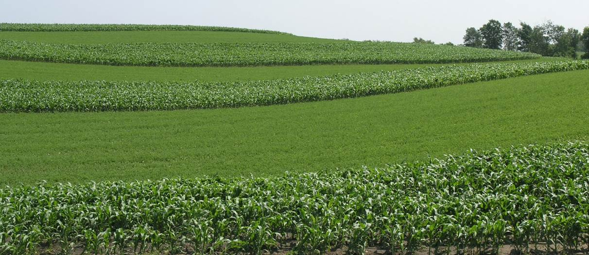 Nrcs helps landowners manage for soil health buffer for Pictures of uses of soil
