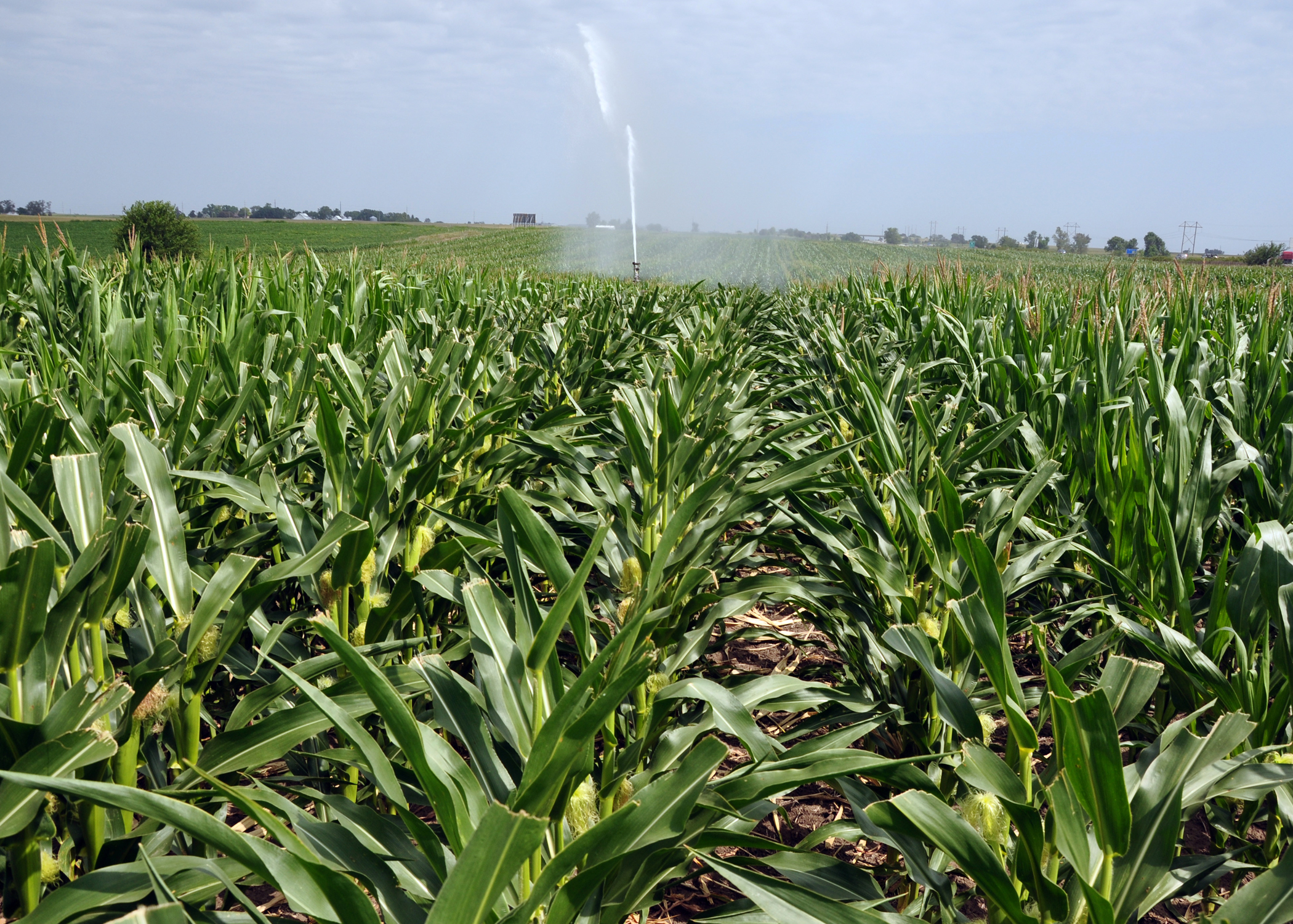2012 Seed Corn Irrigation