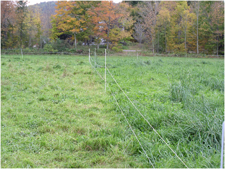 Grazing Management - Grazed and Ungrazed Pastures
