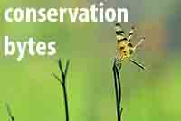 Conservation Bytes1