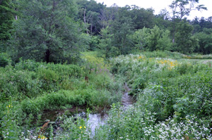 Streambank restoration in the Driftless Area.