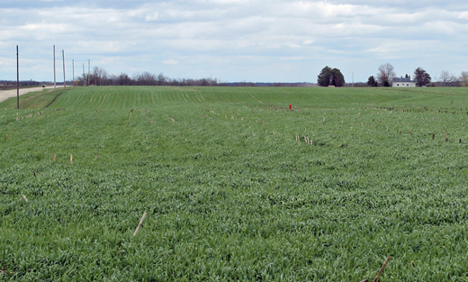 Wapello County Cereal Rye Cover Crops