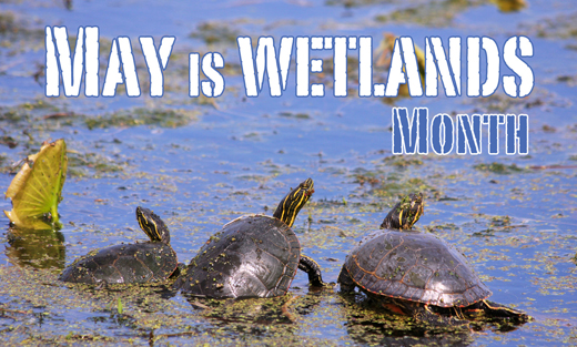 May is Wetlands Month