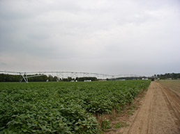 Pivot irrigation helps producers cover more acres with better control and higher yields