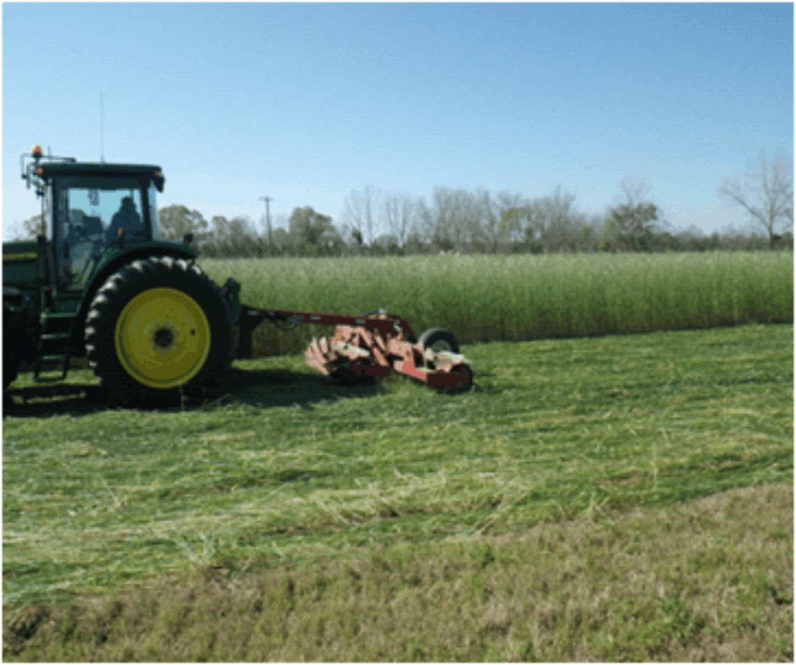 4-13Roller/crimper demonstrated on cover crops