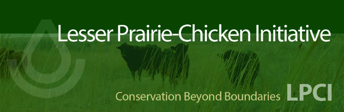 Lesser Prairie Chicken Initiative  - 
