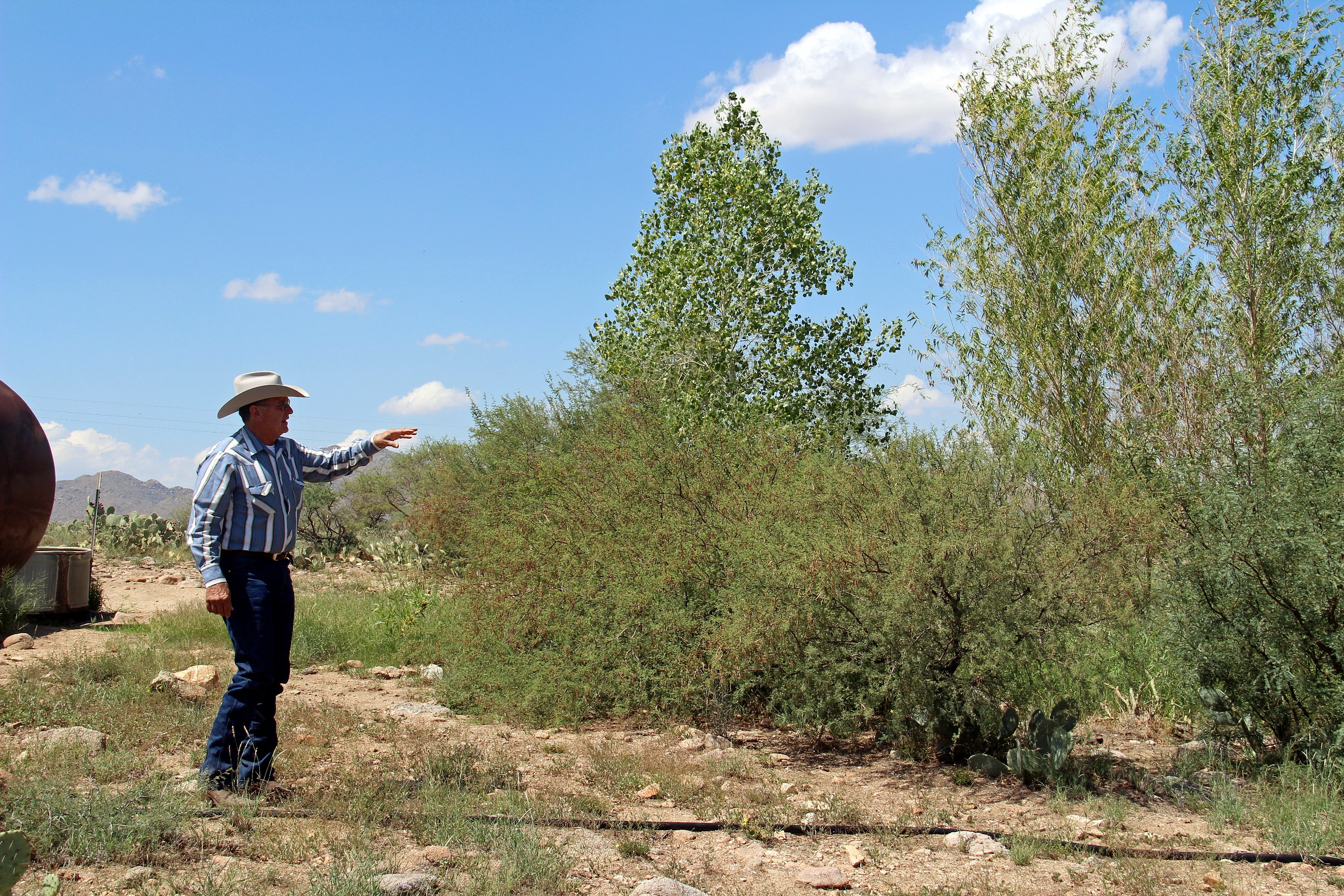 Over the course of three years, a riparian area has grown around the water tanks voluntarily.