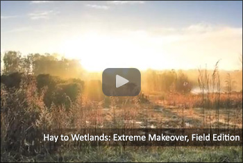 Hay to Wetlands : Extreme Makeover