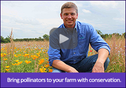 Video: Bring pollinators to your farm with conservation.