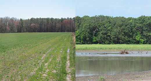 Before shot contains wet, marginal farmland; after shot provides habitat for migratory geese.