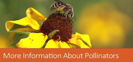 More information about pollinators