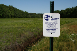 A wetland protected through the Wetlands Reserve Program (WRP)