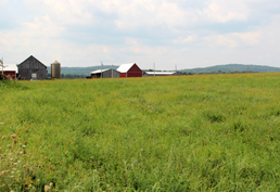 A Berkshire County farm