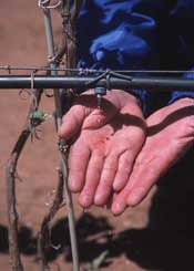 Drip irrigation on a farm.