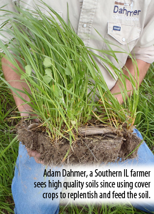 Dahmer sees high quality soils since using cover crops to replentish and feed the soil.