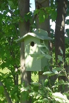 A birdhouse mounted in a tree for cavity nesting birds