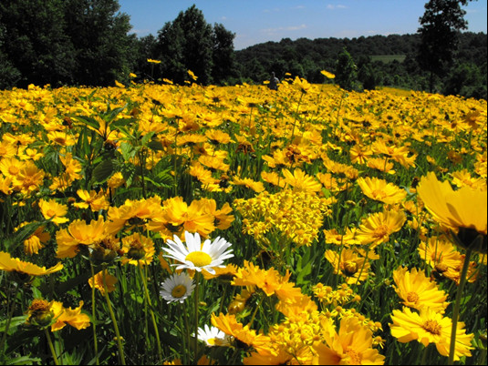 Pollinator Field in Giles County