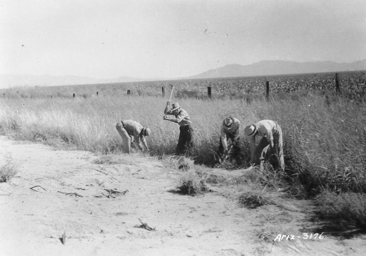 Plant collecting in 1937