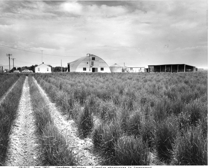 June 1957 field planting of Siberian wheatgrass in forground of the Aberdeen Plant Materials Center