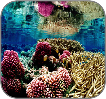 Coral reefs new
