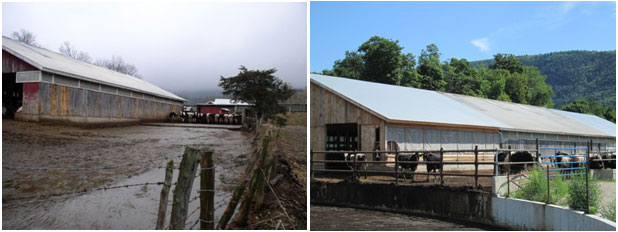 Cedar Hill Barnyard before and after conservation