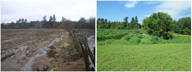 Cedar Hill cropland and pasture before and after conservation work