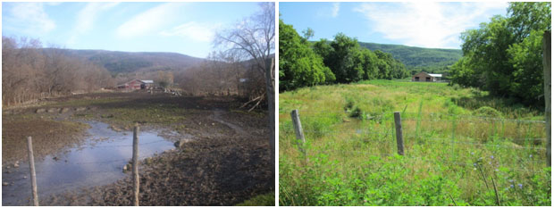 Cedar Hill Farm pasture before and after conservation work