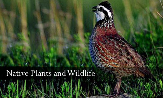 Native Plants and Wildlife