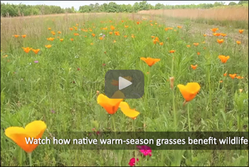 Native Plants YouTube Video Photo