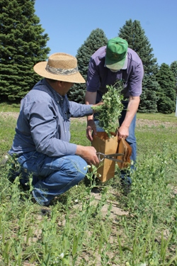 Mark Janzen and Rich Wynia gather plant samples