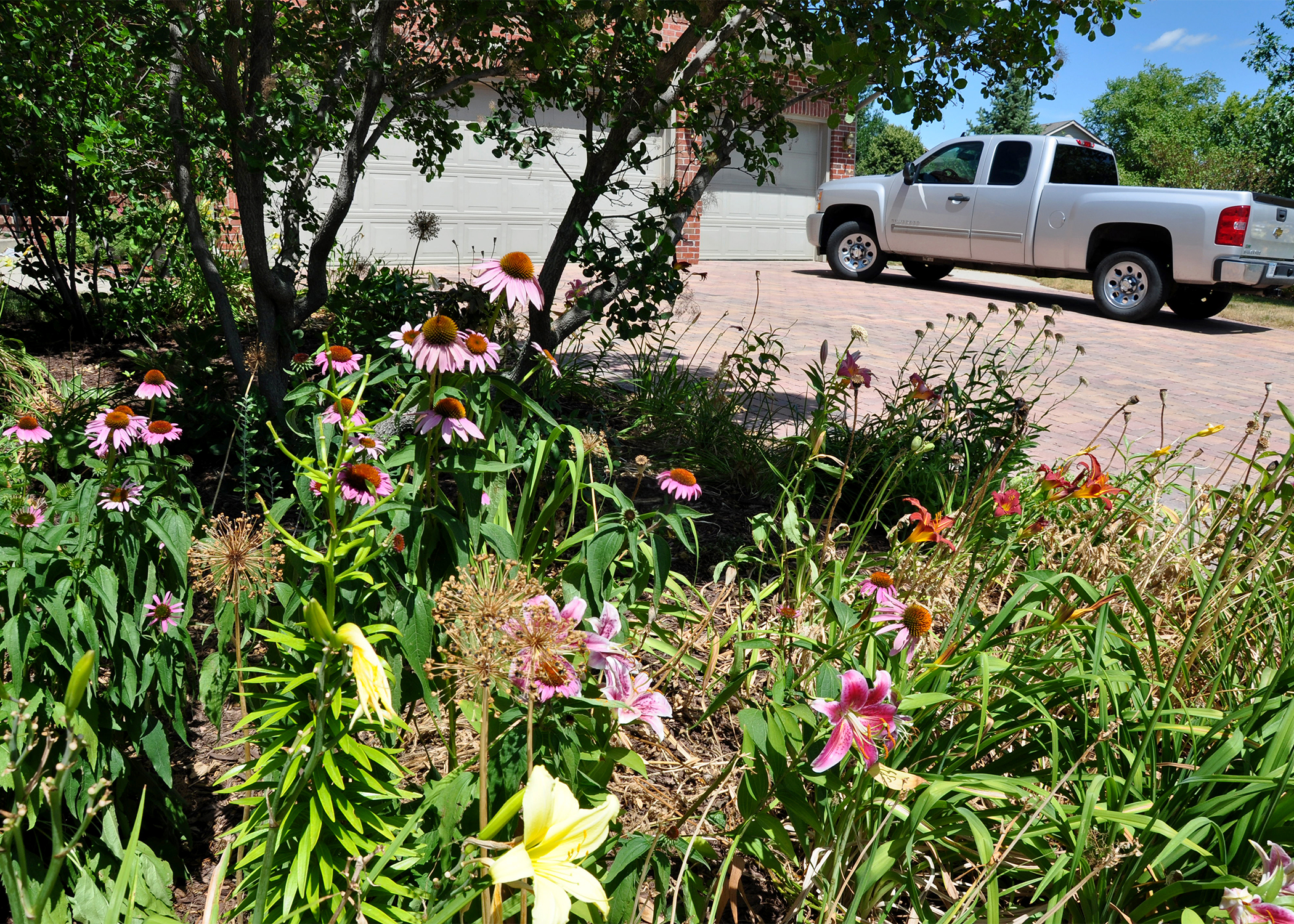 An Ankeny, Iowa, homeowner uses native vegetation to landscape the yard.