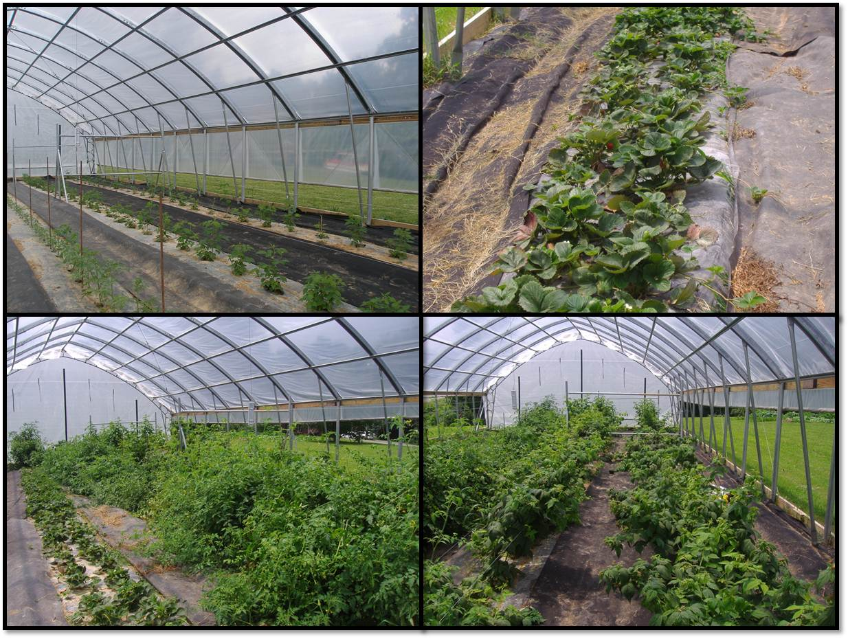 Adams Family Seasonal High Tunnel Progression