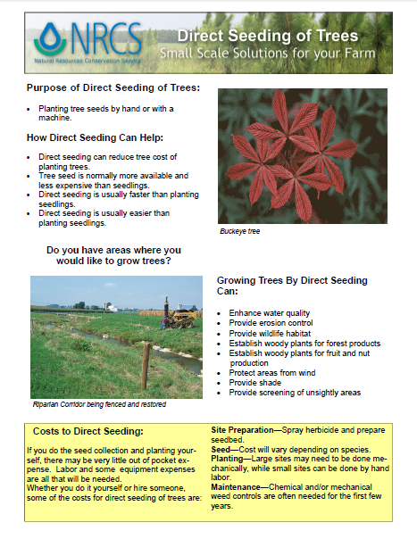 Direct Seeding of Trees