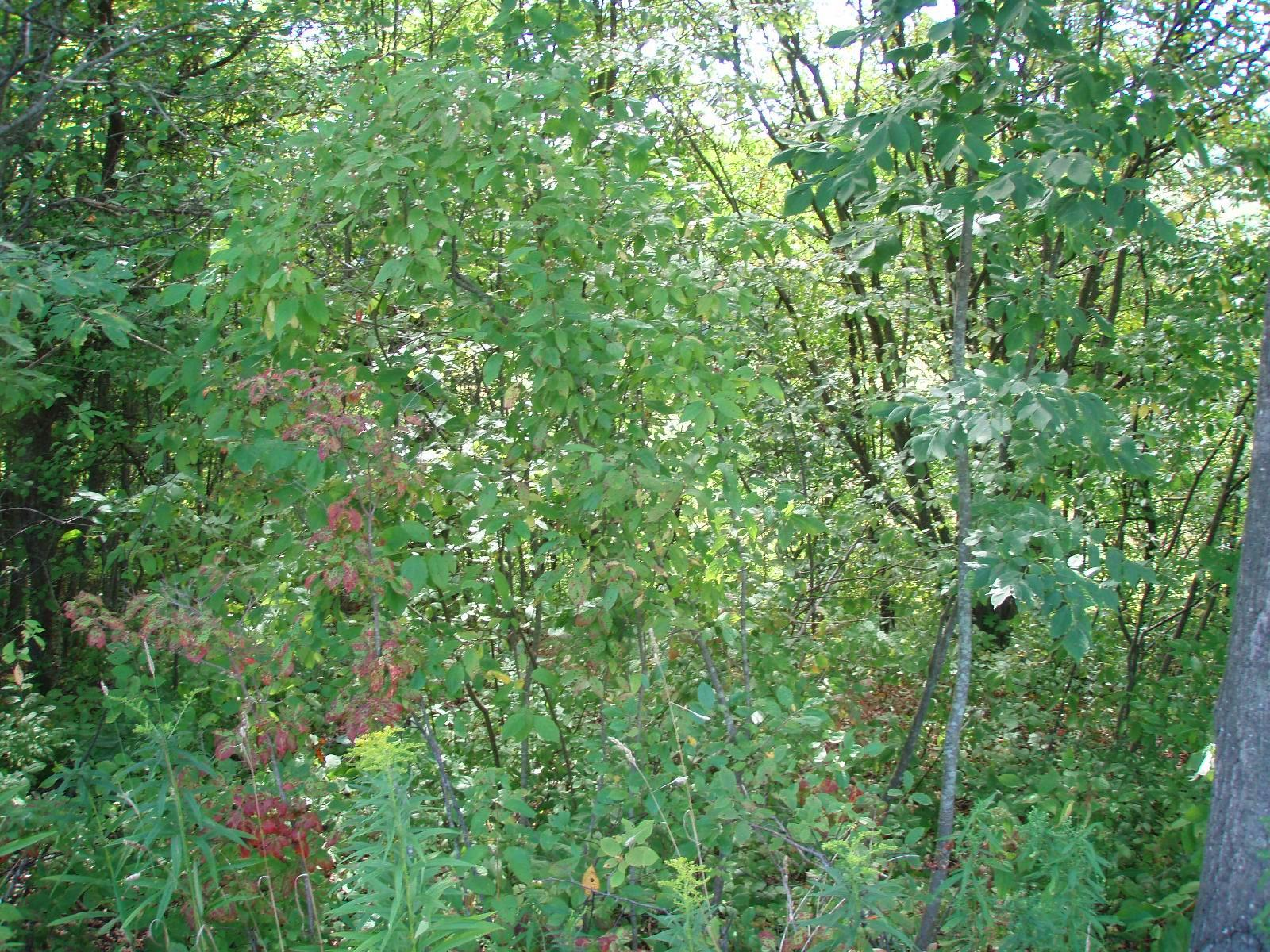 Overgrown areas benefit from tree and shrub removal, selective tree felling, crop tree release, and the establishment of native shrubs and trees.