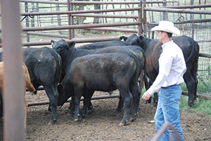 NRCS-GLCI Coordinator Kevin Derzapf helped demonstrate cattle handling techniques.