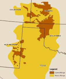 Map of  the range of the Lesser 