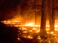 NRCS helps farmers and ranchers recover from fire damage.
