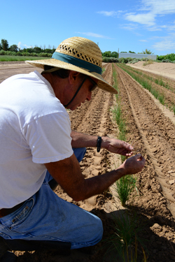 Fenchel, manager of the Center, examines native grasses grown to help restore the Grand Canyon.