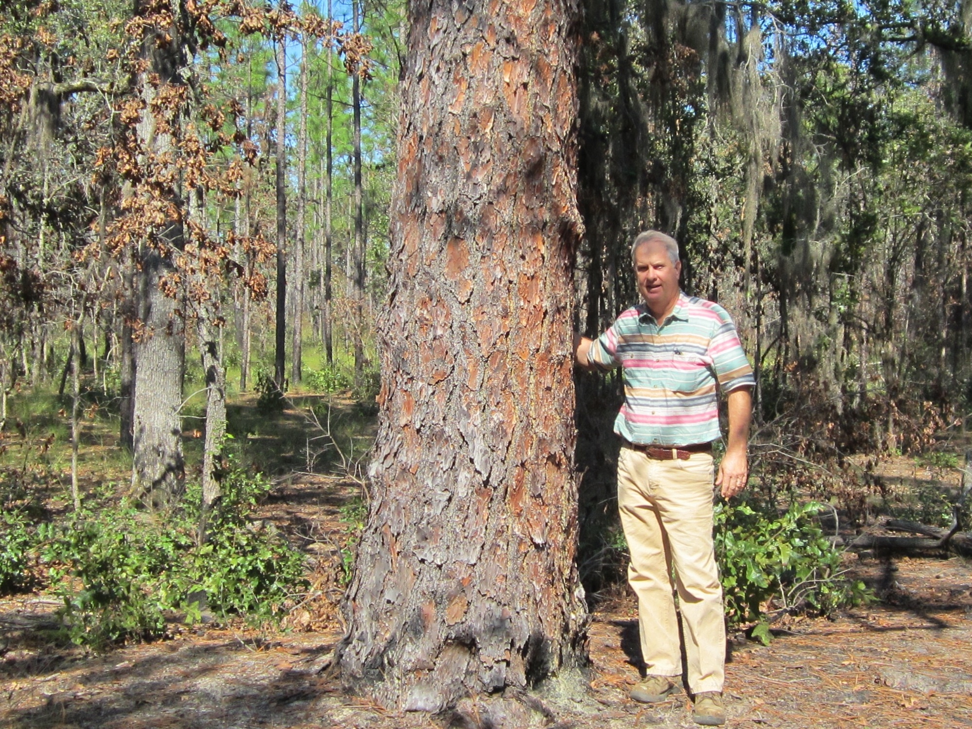 Reese Thompson, a Georgia landowner, is using conservation to improve longleaf pine forests on his l