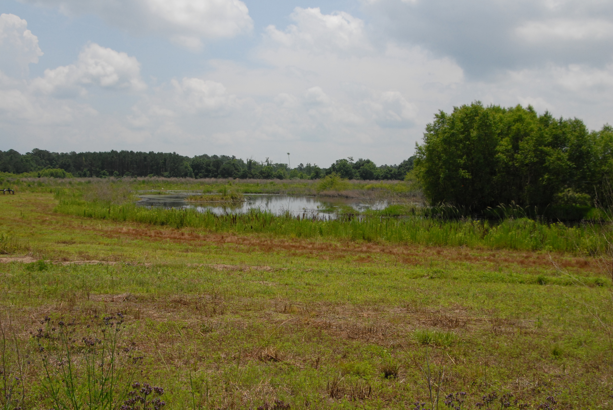 Image of a wetland area in southwest Georgia
