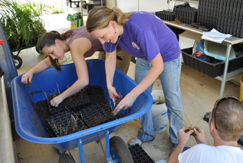 Jodi Hill and her research assistants pot up warm season grasses for her silvopasture study.